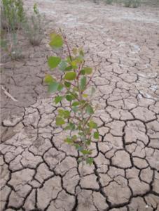 Drought-Plant-Photo